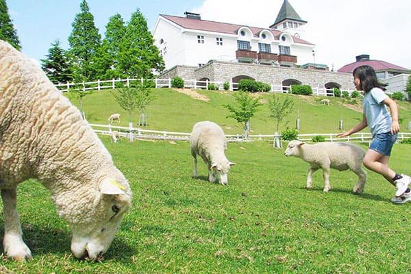 Kobe Municipal Rokkosan Pasture