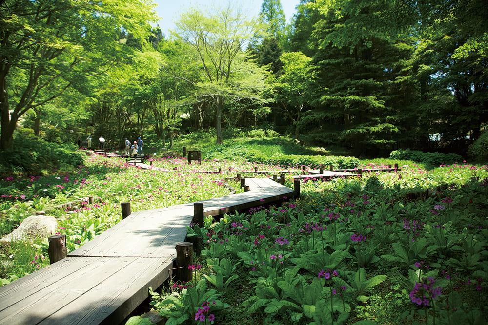 초록에 둘러싸인 롯코 고산 식물원의 풍경입니다.